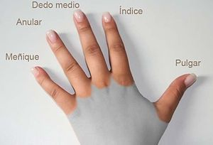 300px-Dedos_de_la_mano